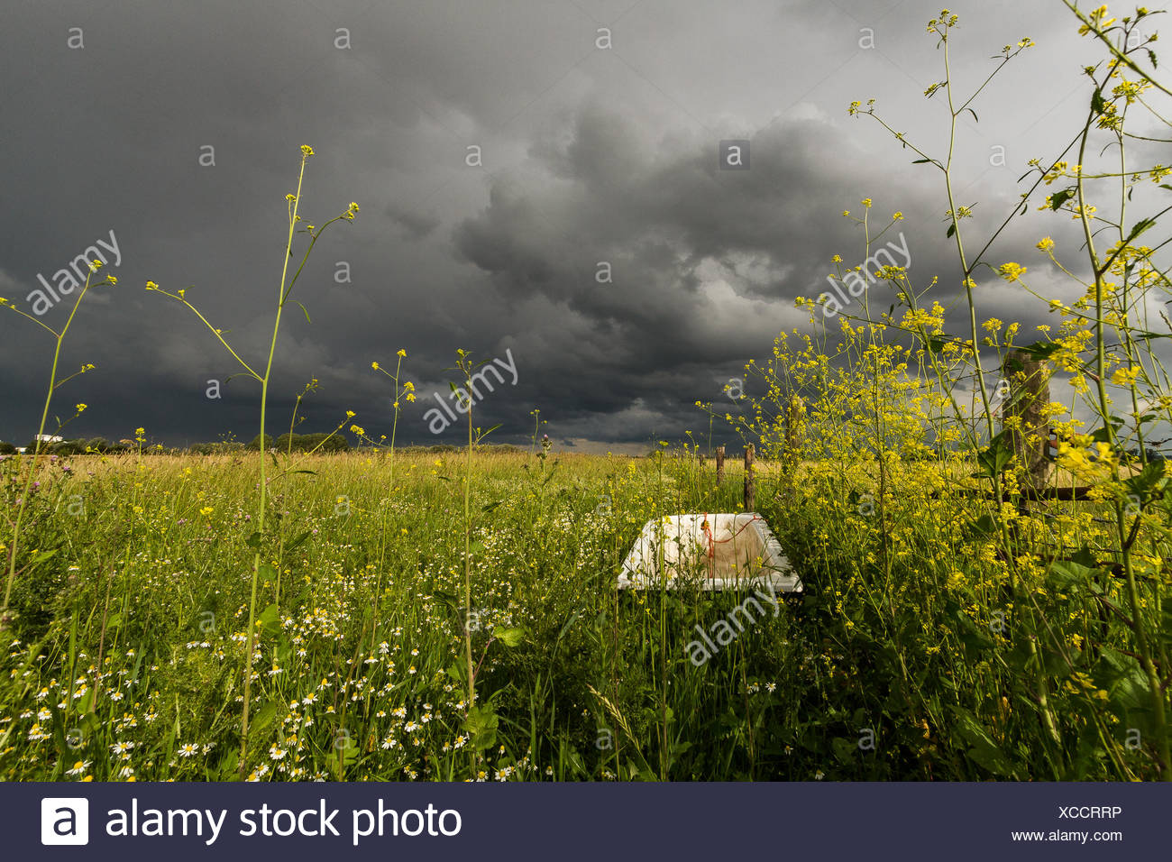 Abandoned bath tub in a field, Holland - Stock Image