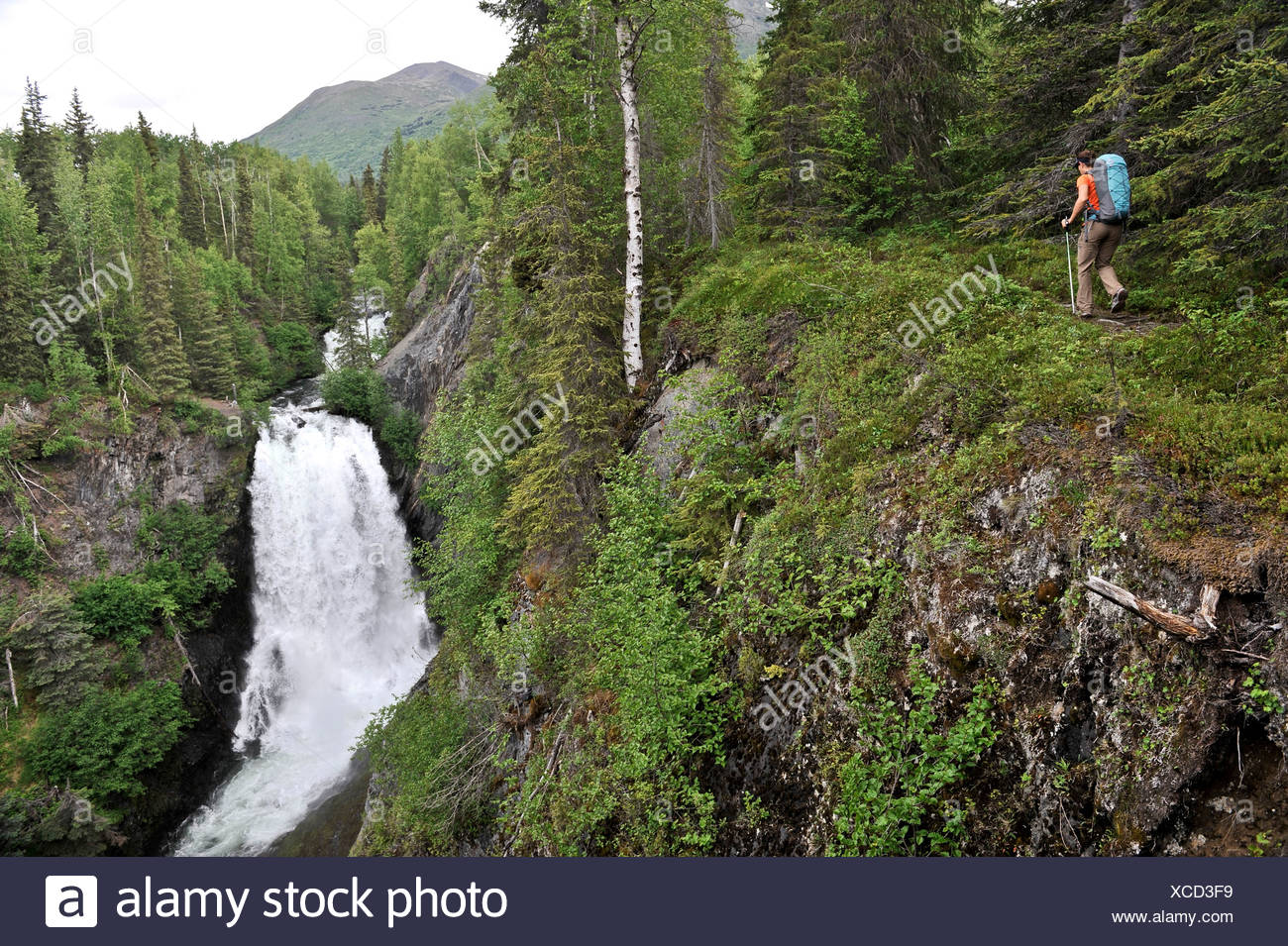 Woman hikes near Juneau Falls on the Resurrection Pass Trail in the Chugach National Forest, Southcentral Alaska, Summer - Stock Image