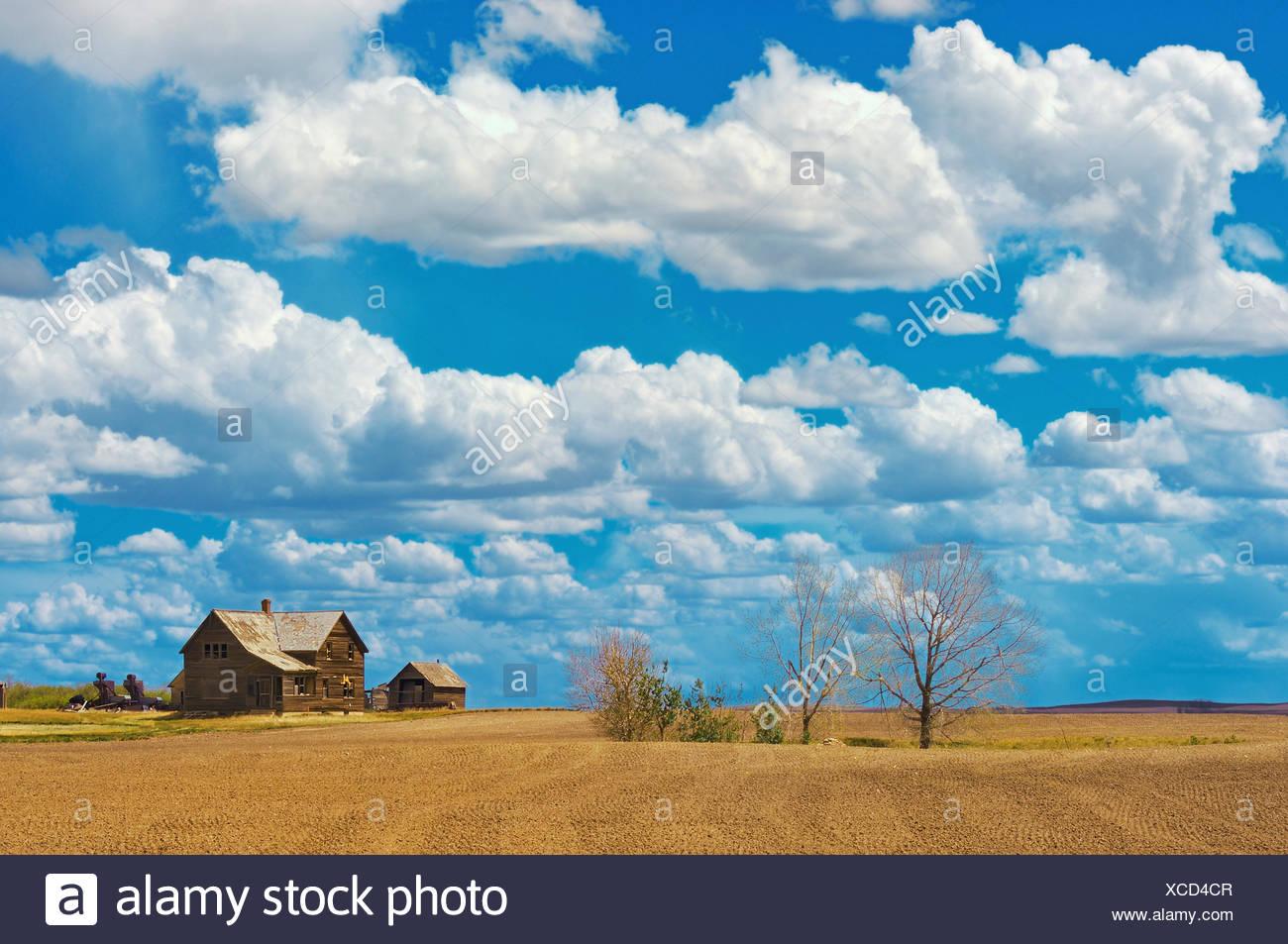 Old farmstead on th eprairie South East Alberta (near Jenner) Alberta Canada - Stock Image