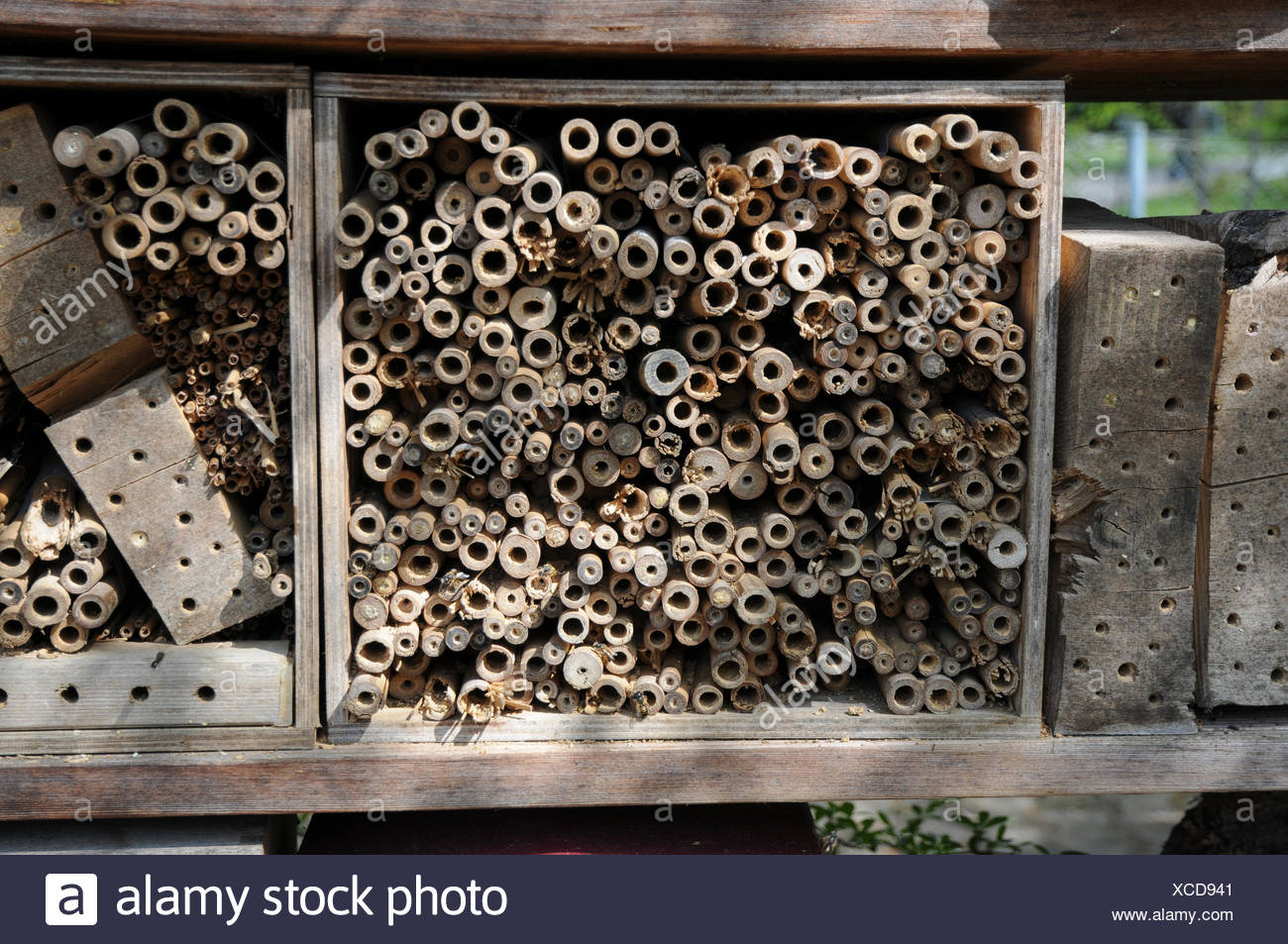 Insect house with wild bees - Stock Image