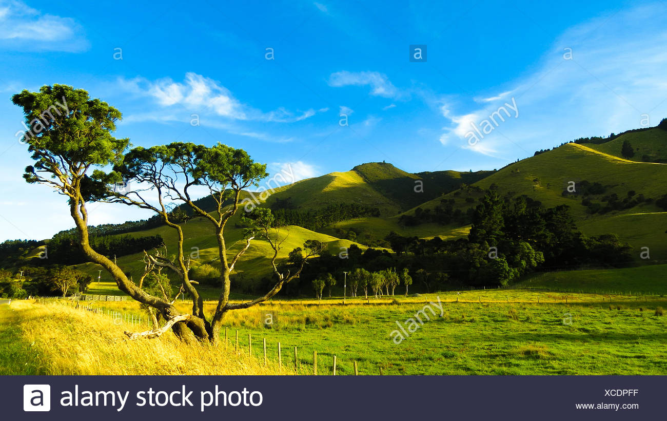 New Zealand, Wairarapa, Countryside landscape - Stock Image