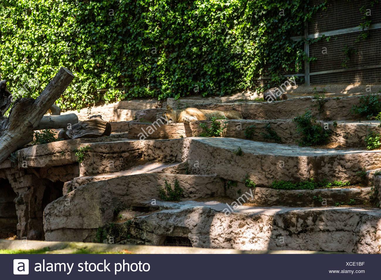 Zoo Barcelona zoo barcelona stock photos zoo barcelona stock images alamy