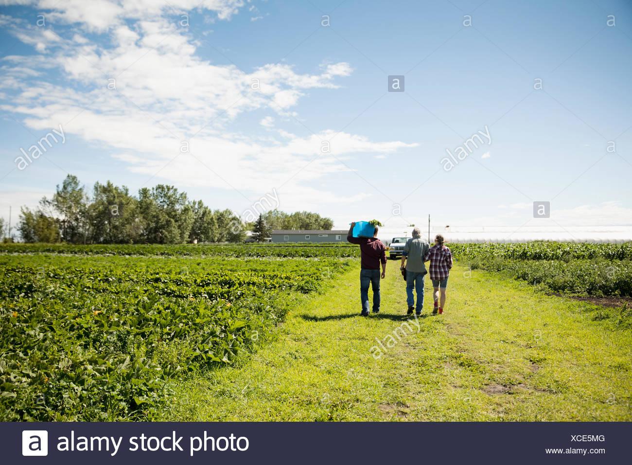 Farmers walking along green crops on sunny farm Stock Photo