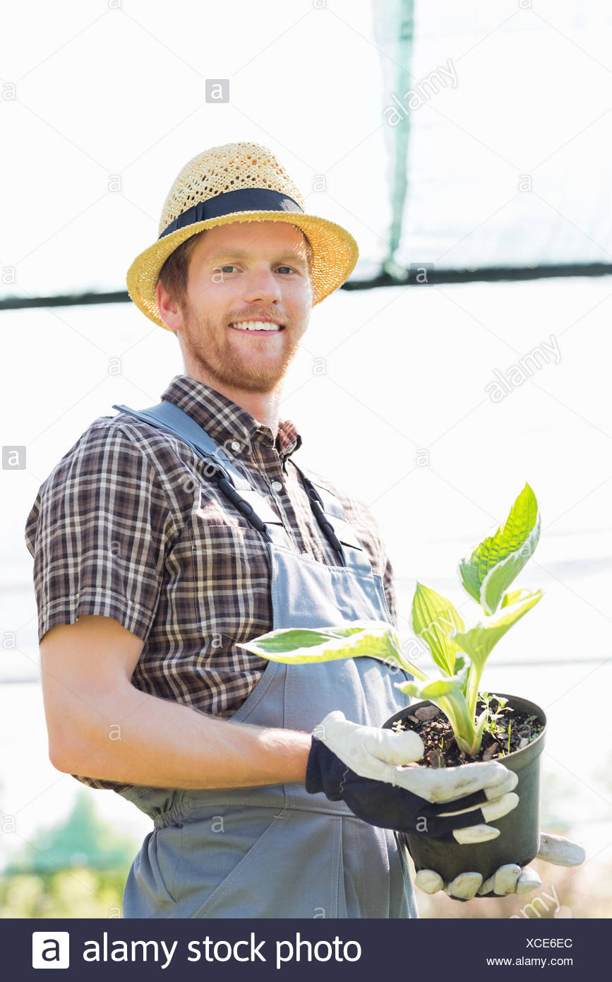 Portrait of happy gardener holding potted plant at greenhouse - Stock Image