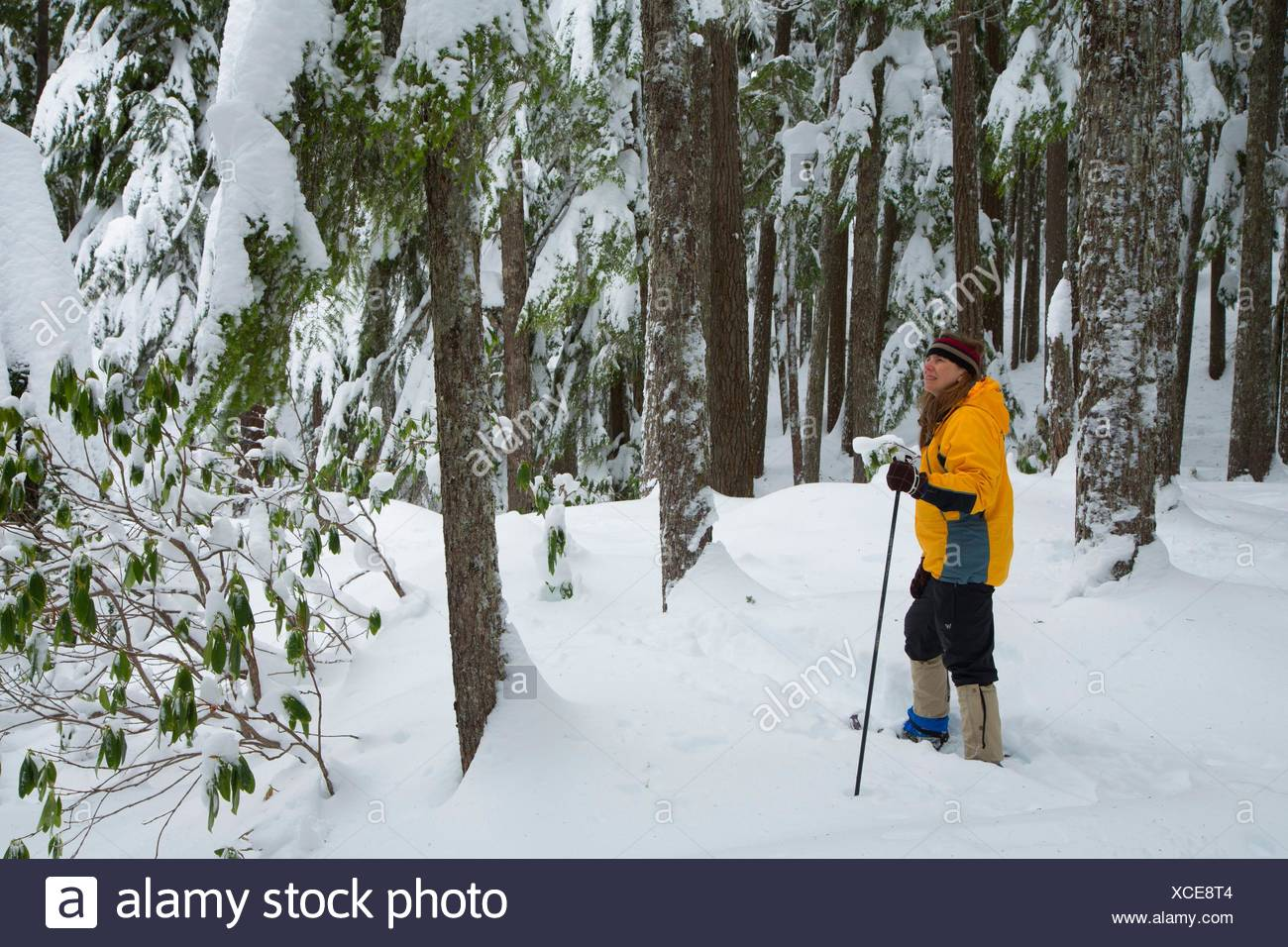 Snowshoeing along Diamond Falls Trail, Willamette National Forest, Oregon. - Stock Image