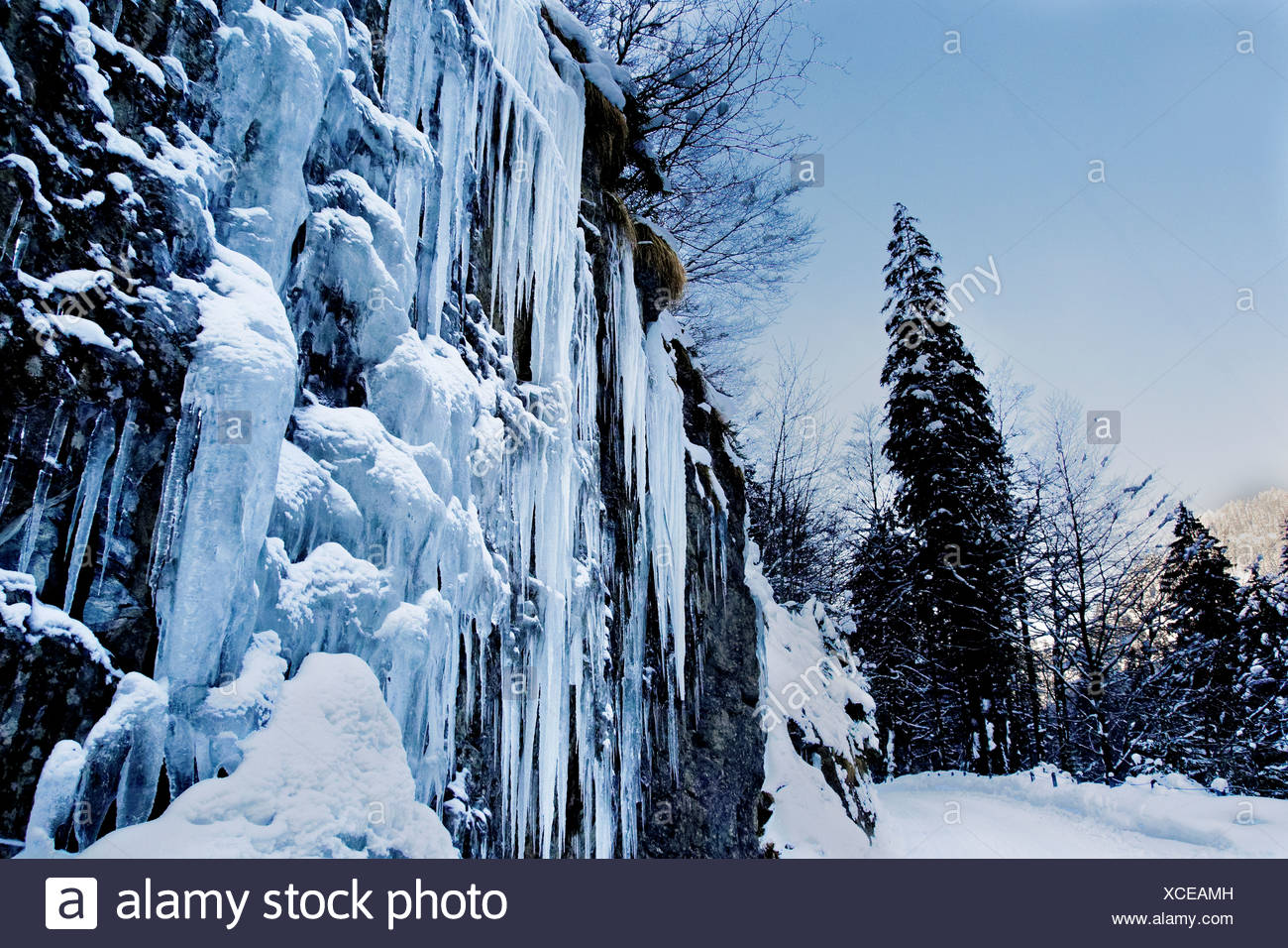 Ice, icicle, Emmental, cliff wall, spruce, frost, canton Bern, Kemmeriboden, scenery, nature, Picea abies, spruce, Schangnau, sn - Stock Image