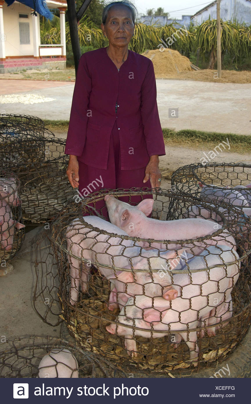 Female pig farmer with piglets, Viet Nam - Stock Image