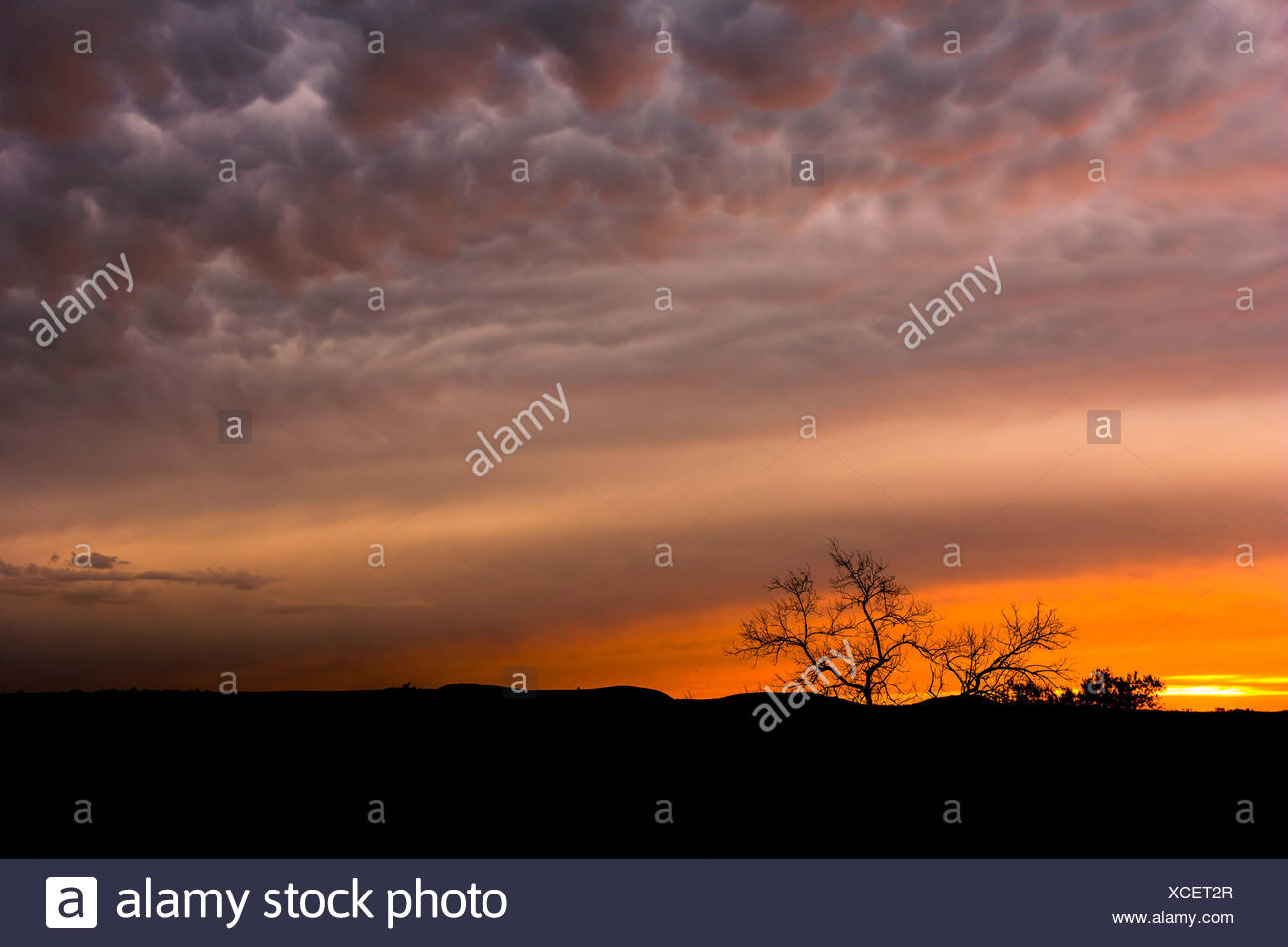 Monaghan farm, Lanseria, Province of Gauteng, South Africa, Sunset clouds after a storm, - Stock Image