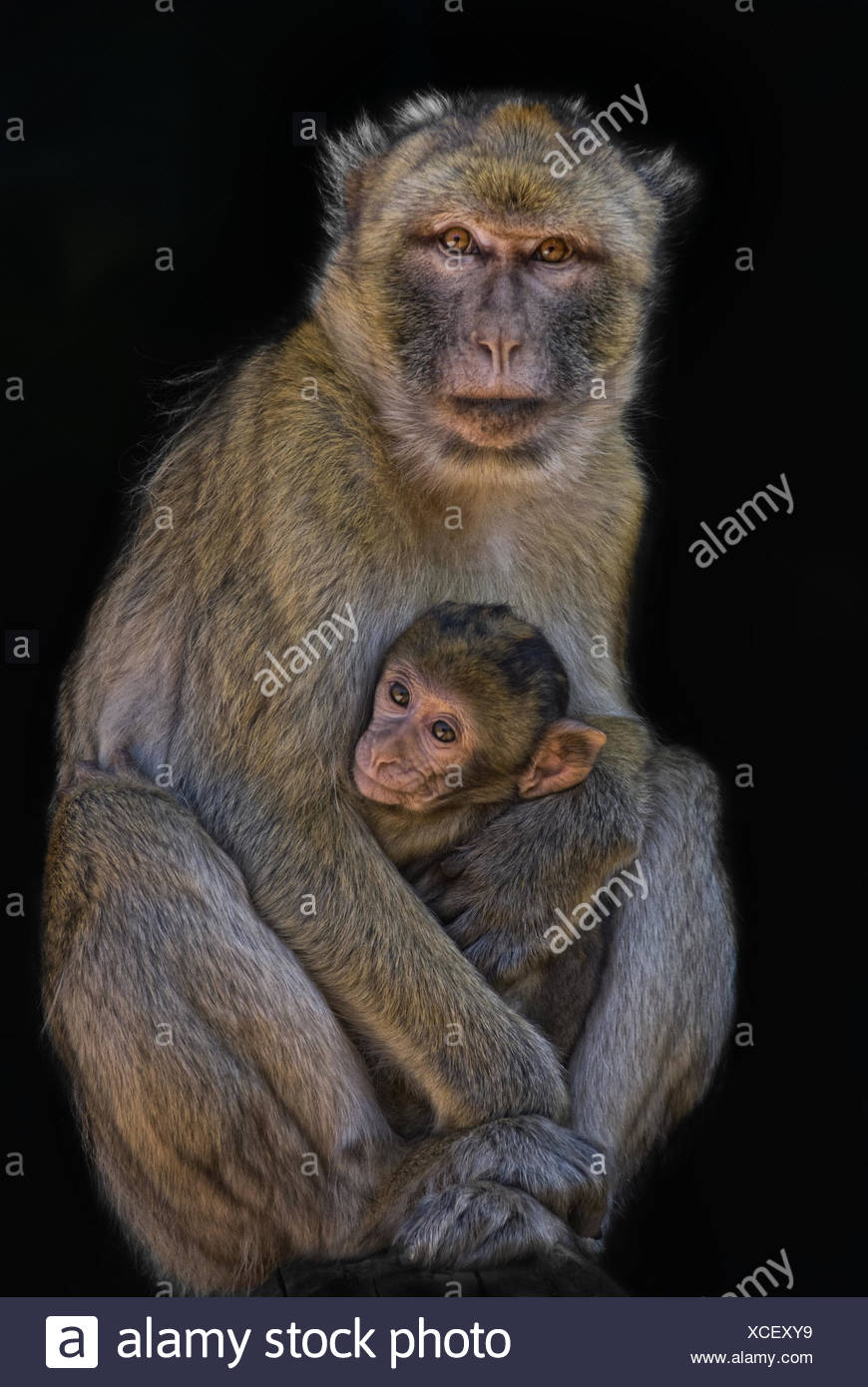 motherly love - Stock Image