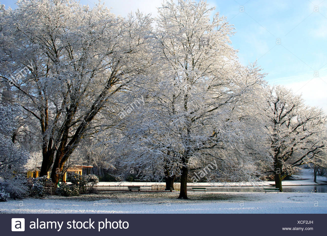 hoarfrost in the park Stock Photo