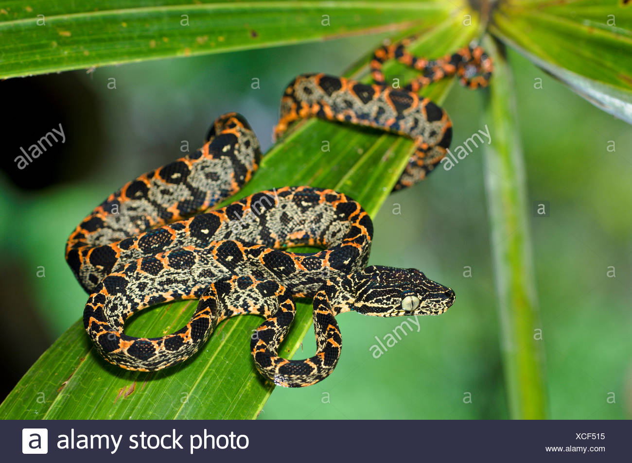 Garden Tree Boa Stock Photos & Garden Tree Boa Stock Images - Alamy