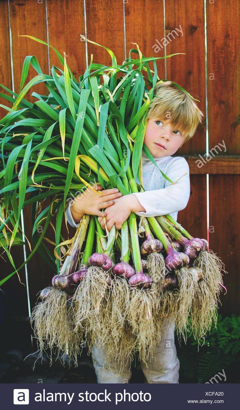 Boy holding freshly picked garlic - Stock Image