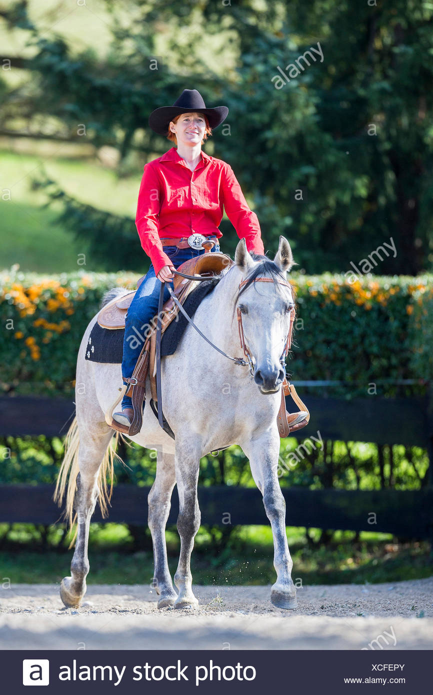 Arabian Horse Western Rider On Gray Mare In A Paddock Walking Austria Stock Photo Alamy