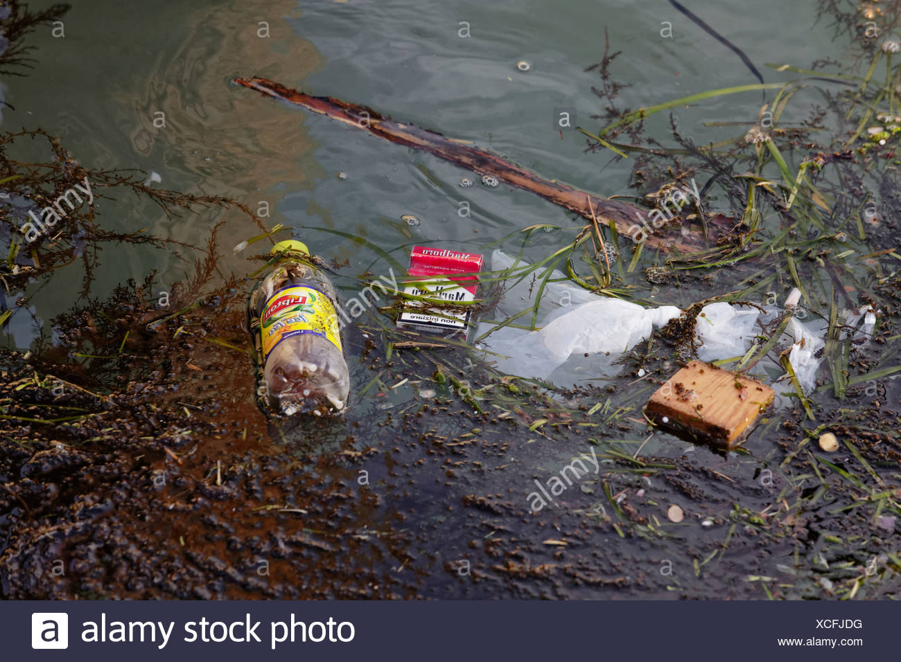 Garbage in the water, pollution, Venice, Venetia, Italy, Europe - Stock Image