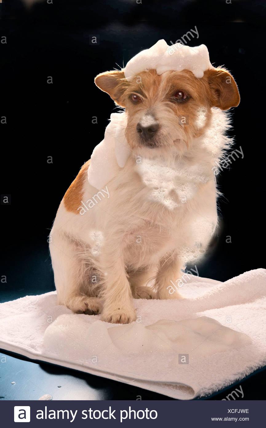 Dog Shampoo Stock Photos & Dog Shampoo Stock Images - Alamy
