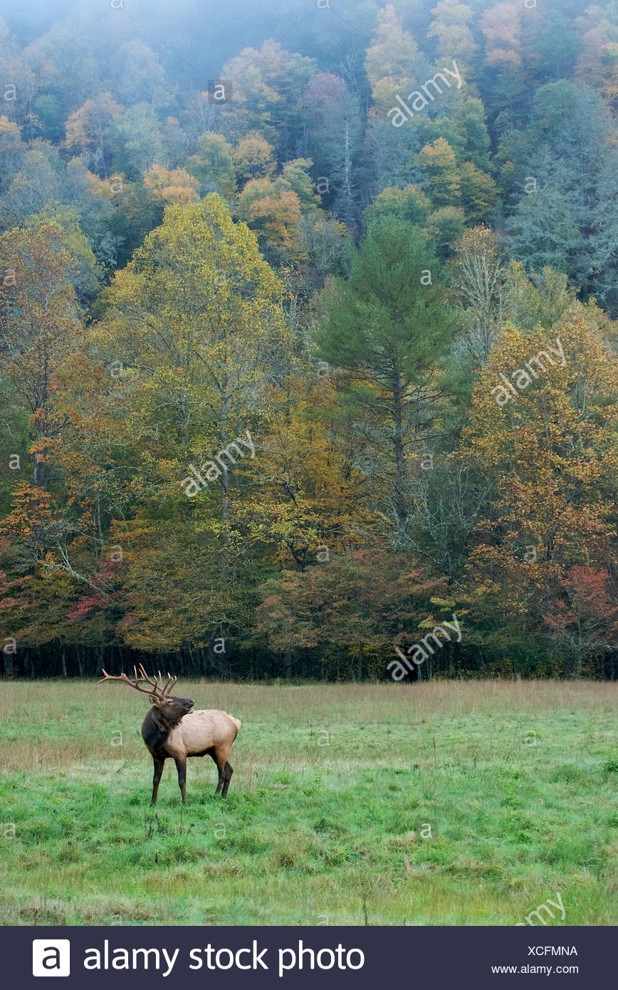 Change Colors Stock Photos & Change Colors Stock Images - Alamy