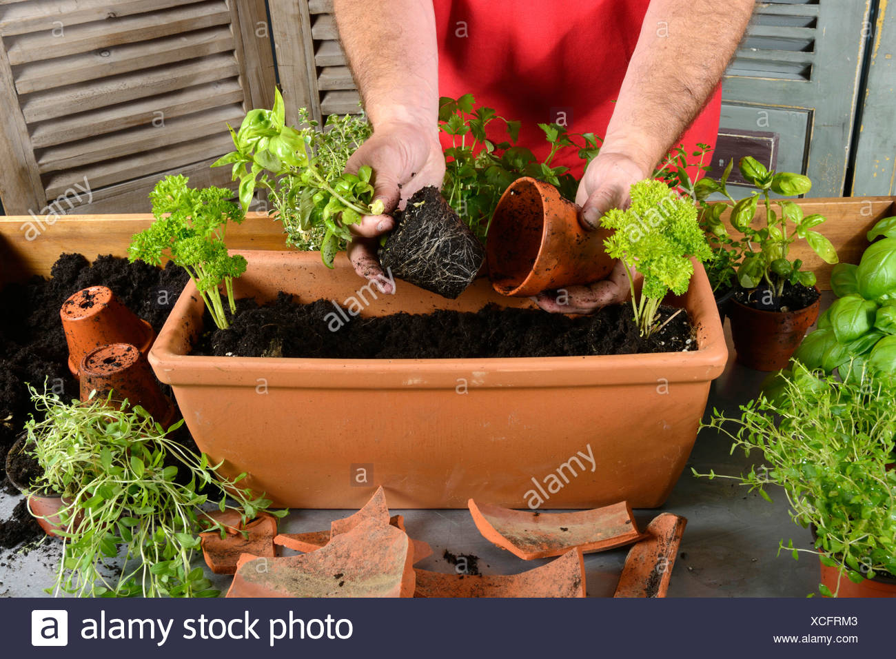 Planting flower box - Stock Image
