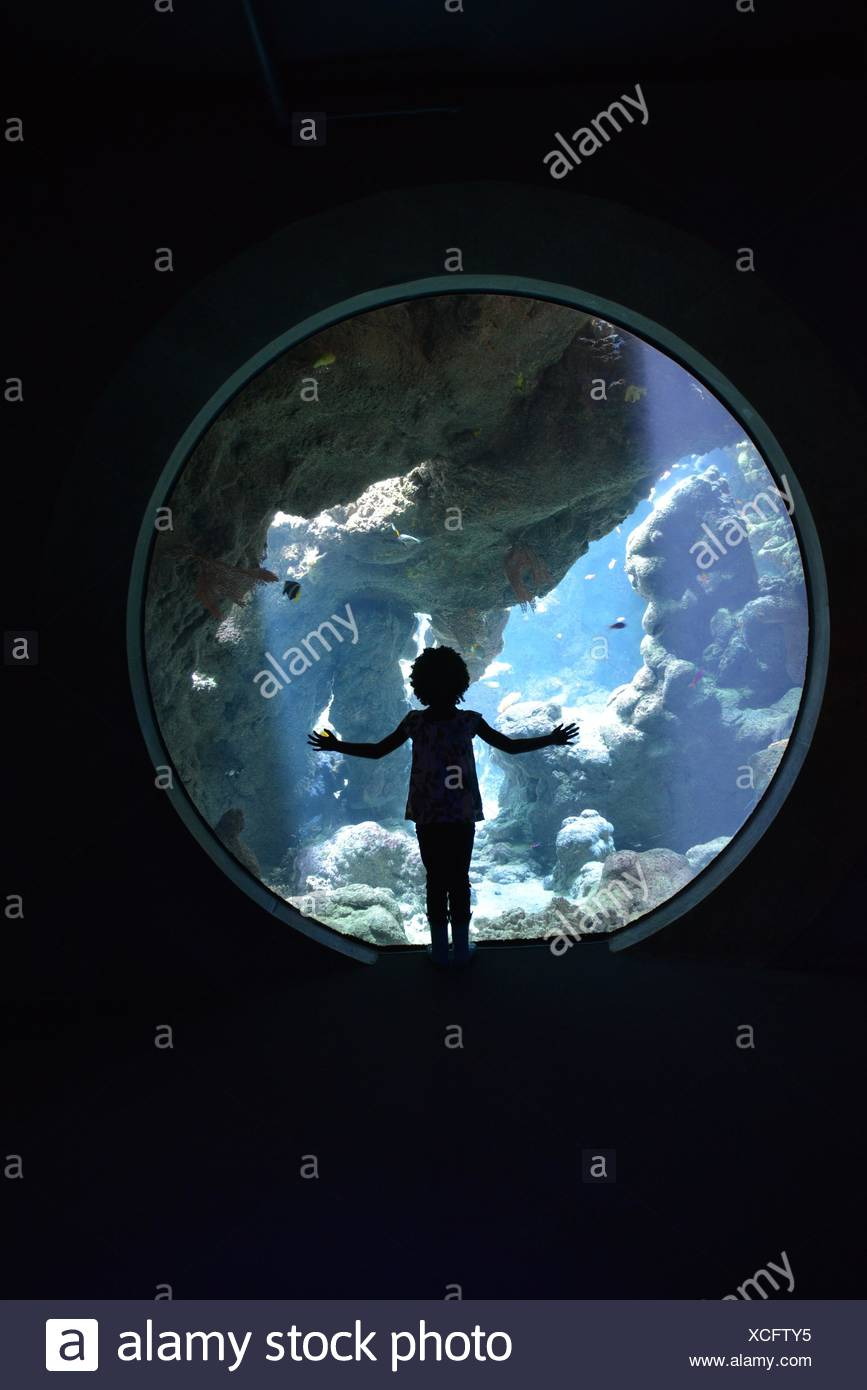 Silhouette of girl looking through through window in aquarium - Stock Image