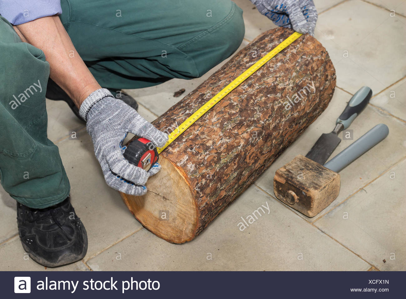 Master measures the length billet of logs - Stock Image