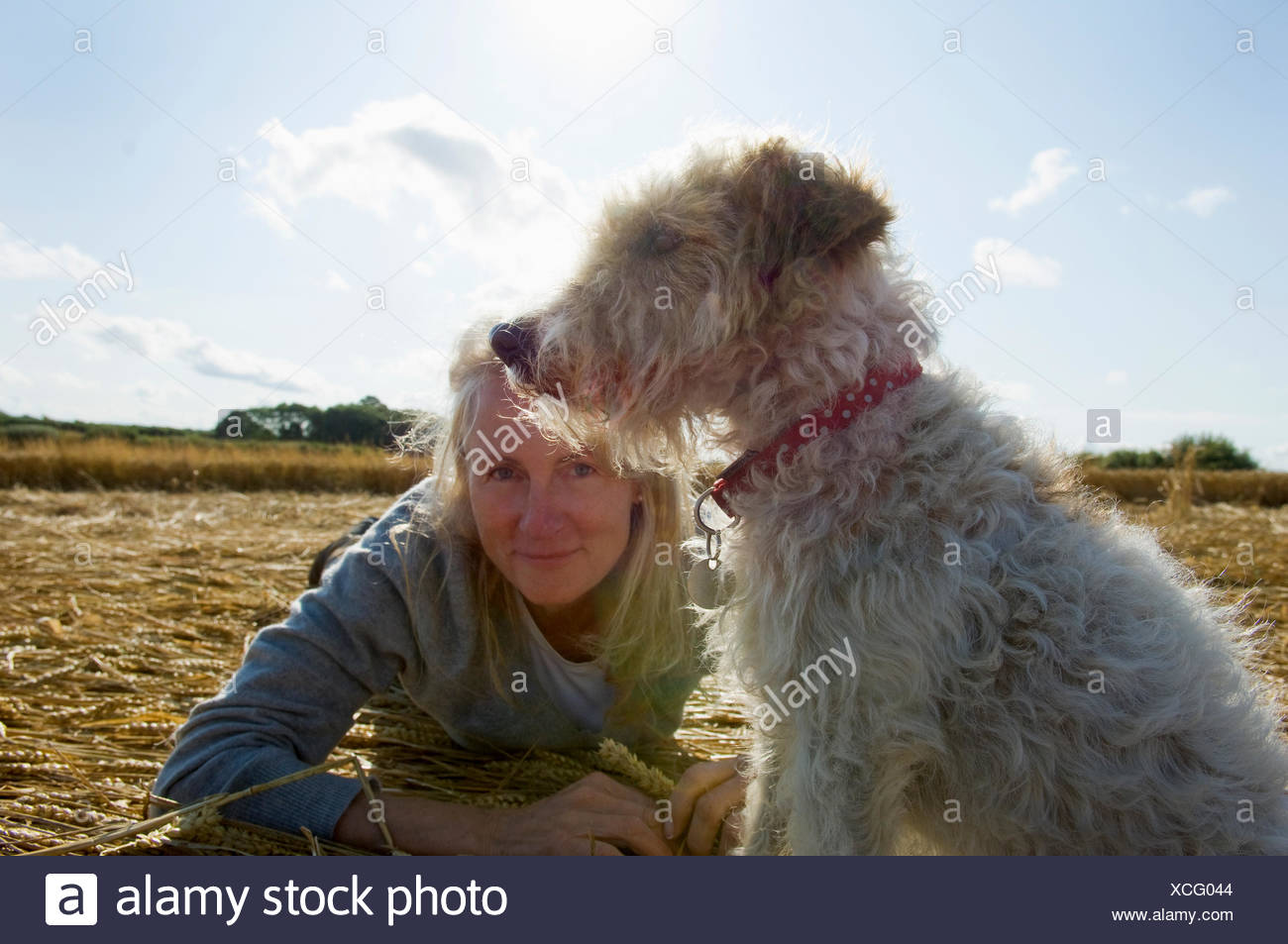 A small dog sitting and looking into the distance. A woman beside him on the group. Harvest. - Stock Image