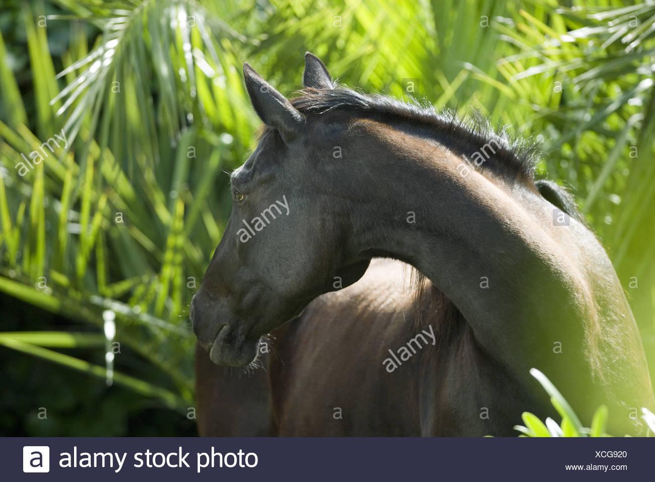 Horse Hybrid Stock Photos Images