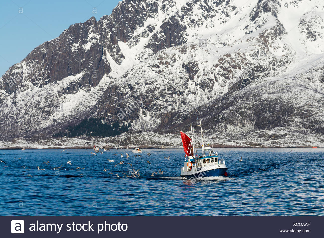 A fishing boat in Svolvaer Bay being followed by seabirds. - Stock Image