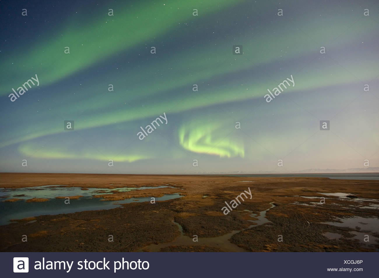 Curtains of colored northern lights (aurora borealis) dance in the night sky over the arctic tundra on the coastal plain of ANWR - Stock Image