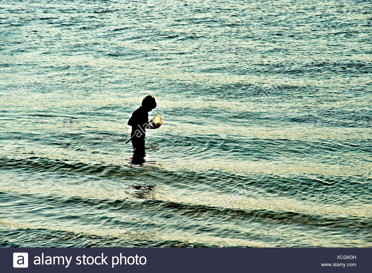 Boy with fishing net in shallow ocean water, Cape Cod, MA, USA - Stock Image