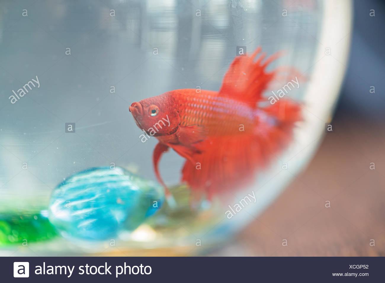 Small Fish Tank Stock Photos & Small Fish Tank Stock Images - Alamy