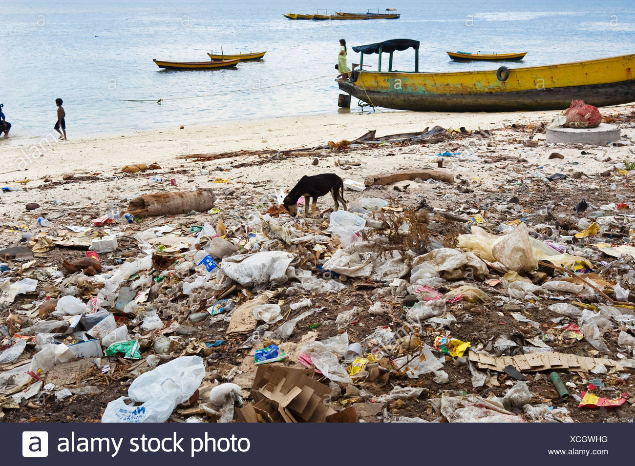 domestic dog (Canis lupus f. familiaris), dog at the beach amidst garbage, India, Andaman Islands - Stock Image