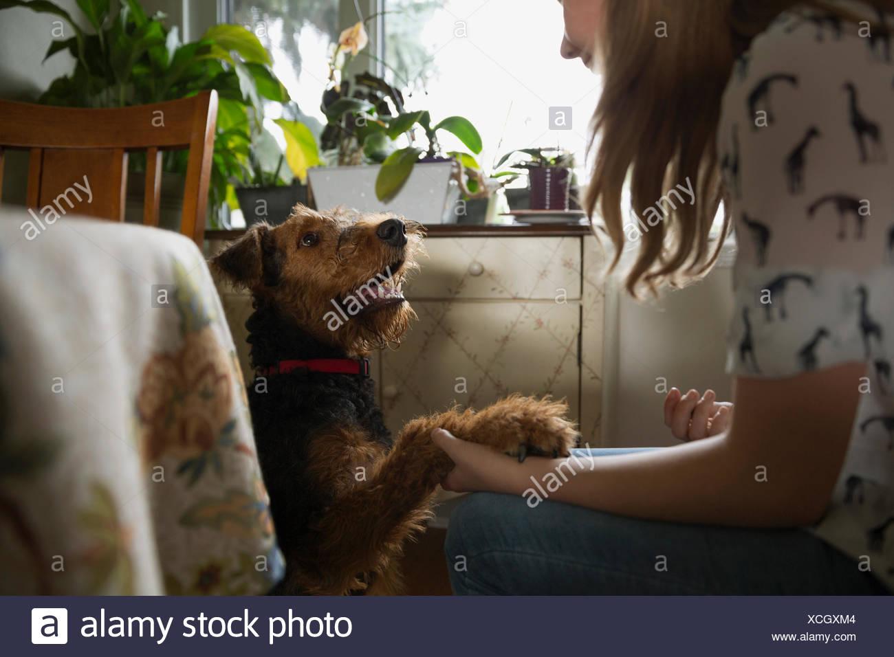 Girl shaking dog paw in kitchen - Stock Image