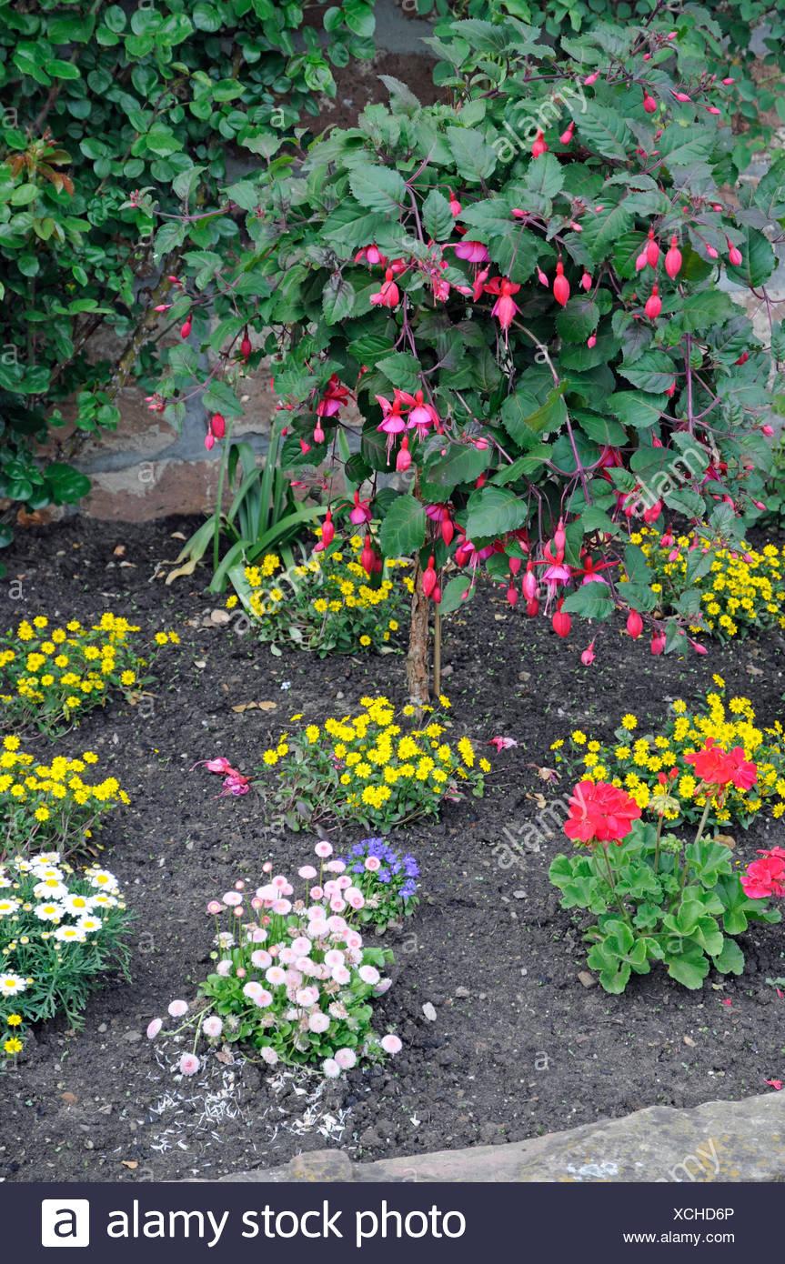 Blumenrabatte, rabatte, blumen, zierpflanzen, garten, park, blumenbeet, stadtmauer, mauer, eberbach, frühling, frühjahr Stock Photo