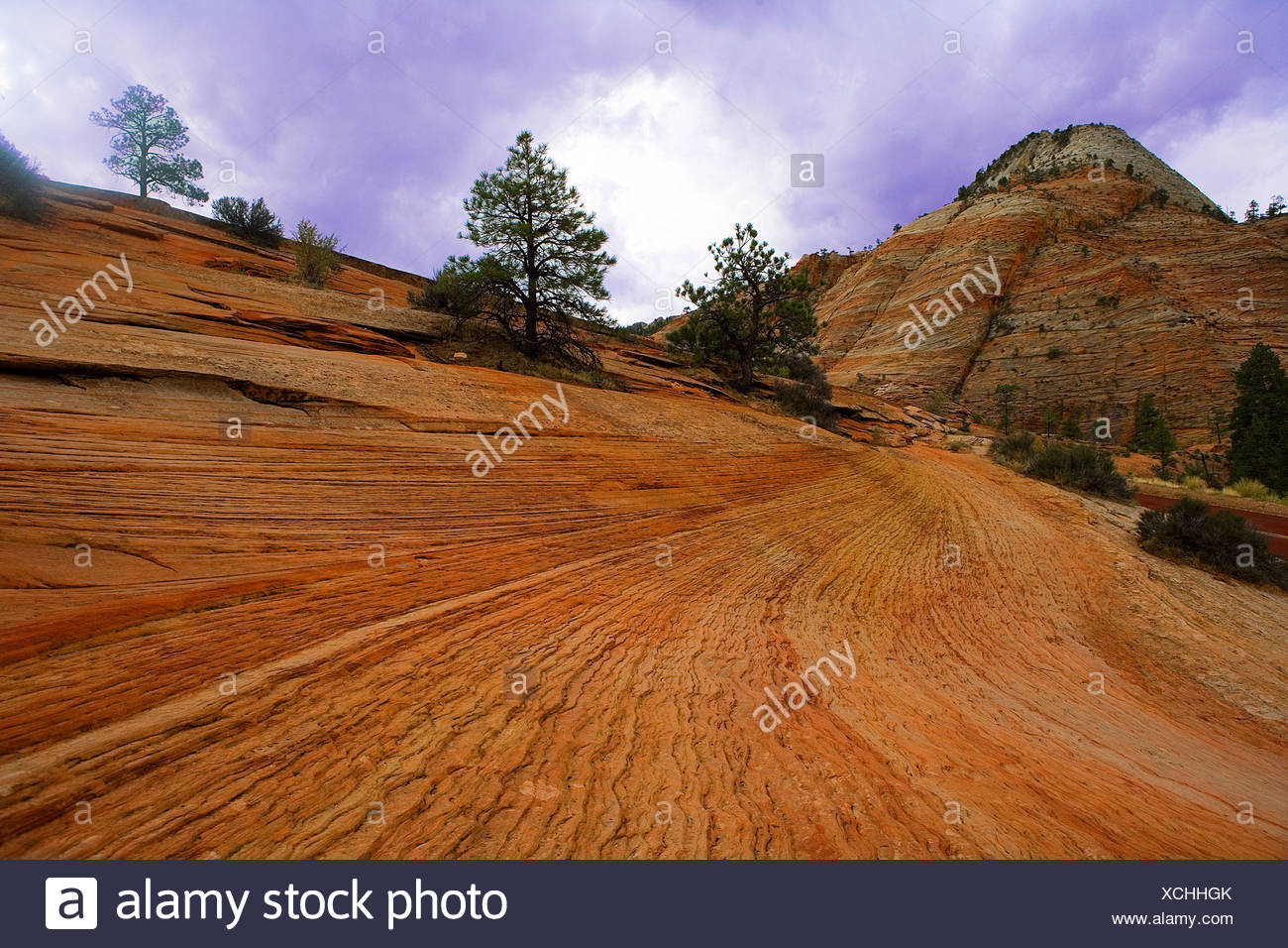 USA America United States North America Utah Zion national park scenery landscape rock cliff cliff scenery - Stock Image