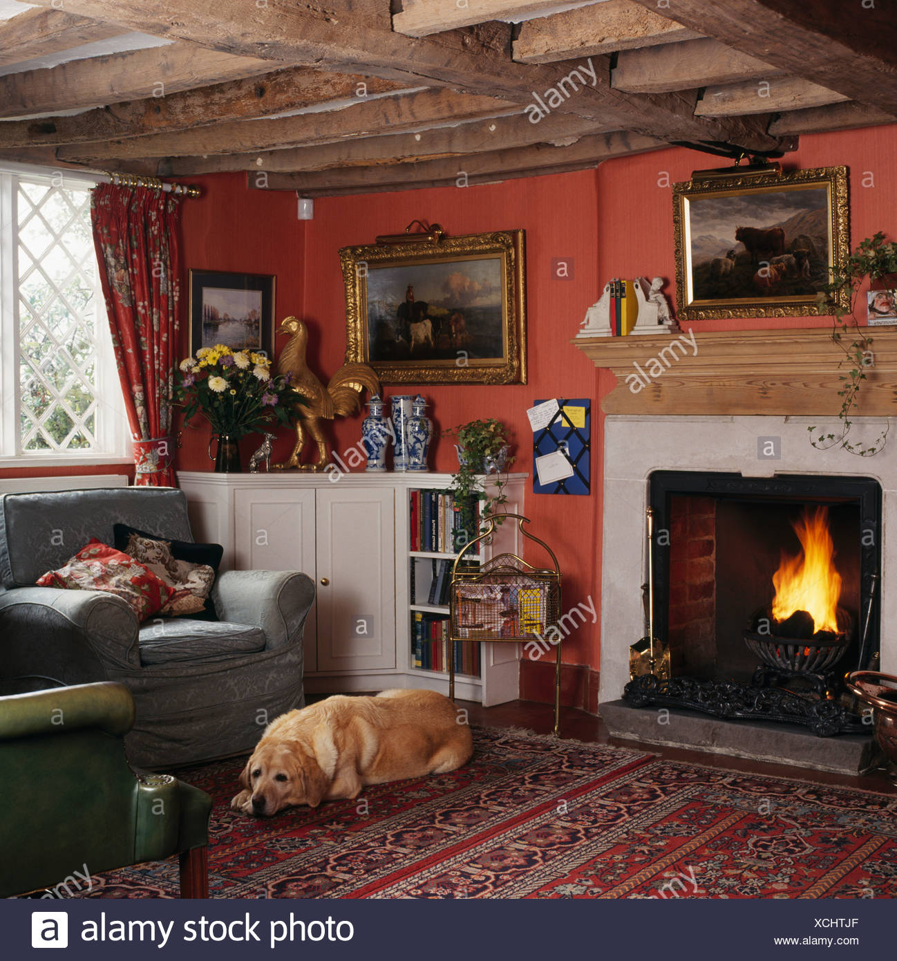 Dog And Fire And Interior Stock Photos & Dog And Fire And Interior ...