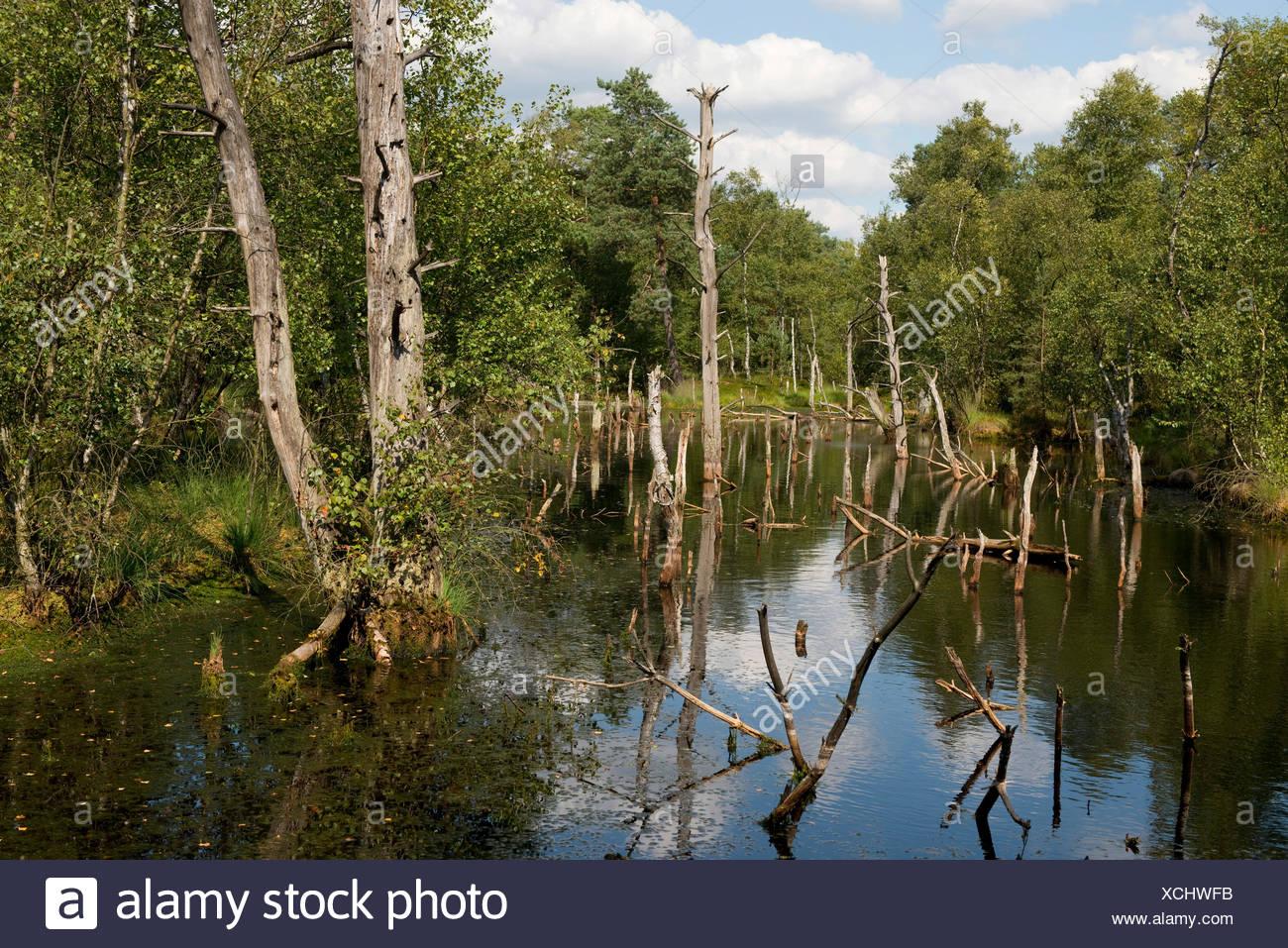 Pietzmoor, Lüneburg Heath Nature Reserve, Schneverdingen, Lower Saxony, Germany - Stock Image