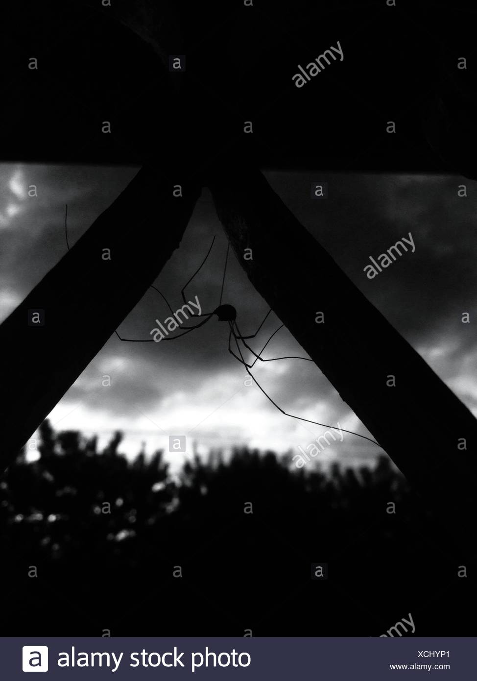 Spider On Web In Night - Stock Image