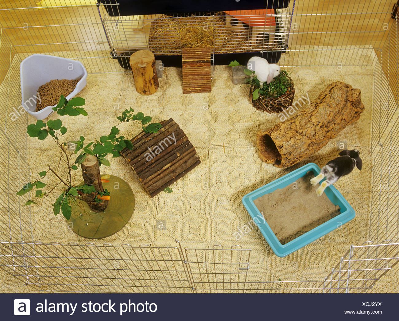 rabbit outdoor enclosure - in apartment attached to cage - Stock Image