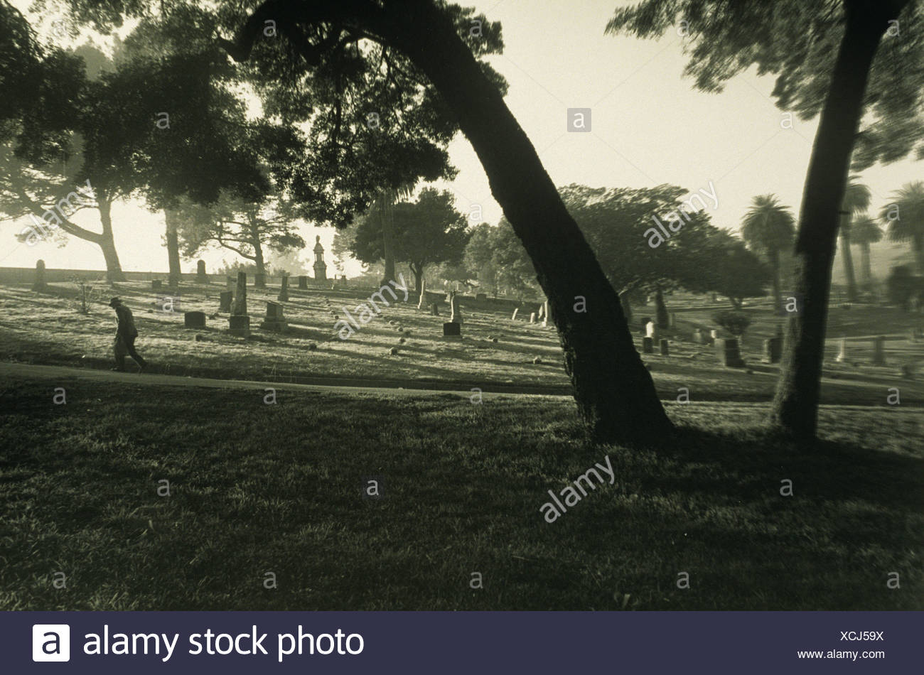 Elderly male figure walking in cemetery under trees - Stock Image
