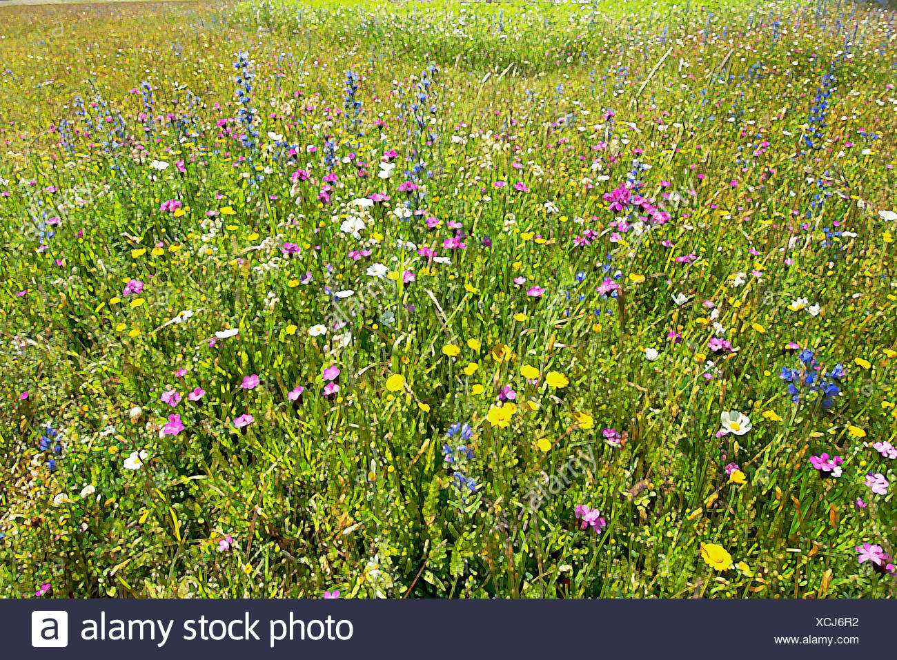 Meadow at the BUGA Munich 05, Photoshop-artistic-filter, - Stock Image