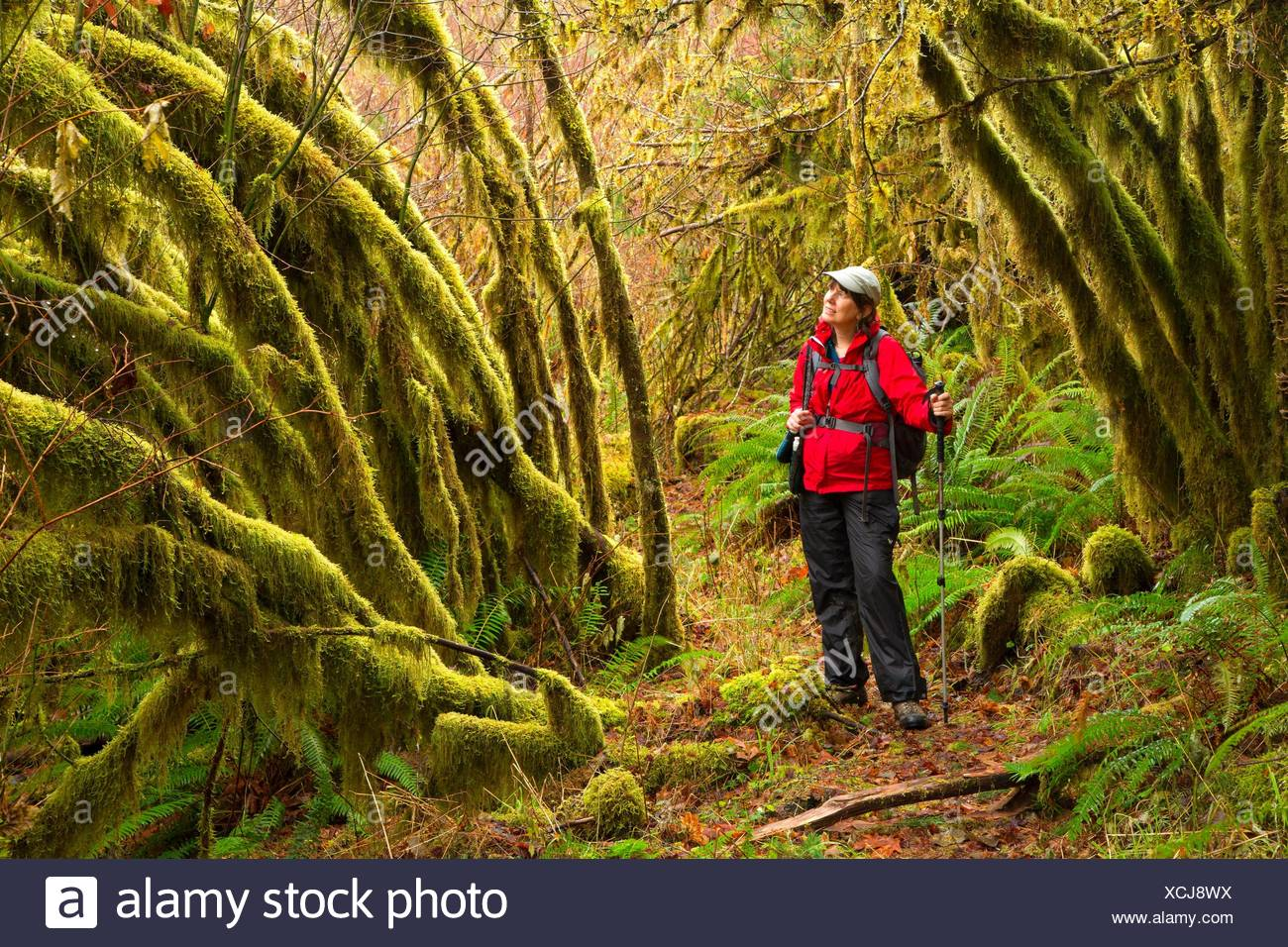 Spruce Run Creek Trail, Clatsop State Forest, Oregon. - Stock Image