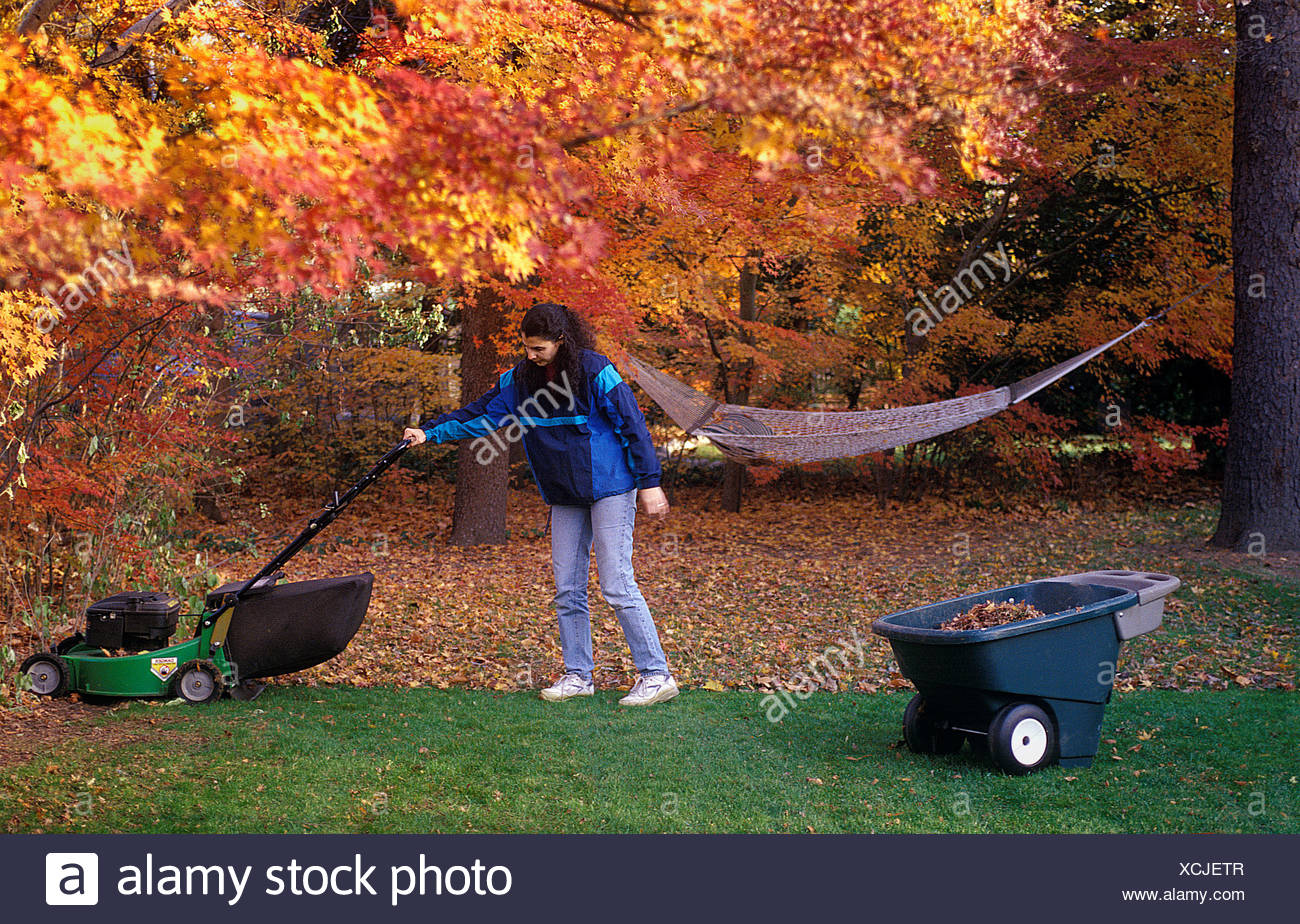 Woman cutting the lawn in autumn - Stock Image