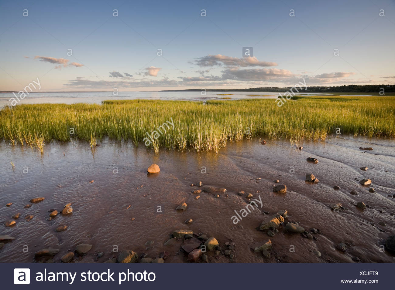 Bay of Fundy mud flats on the Cumberland Basin, part of the Chignecto Bay at Rockport, New Brunswick, Canada - Stock Image