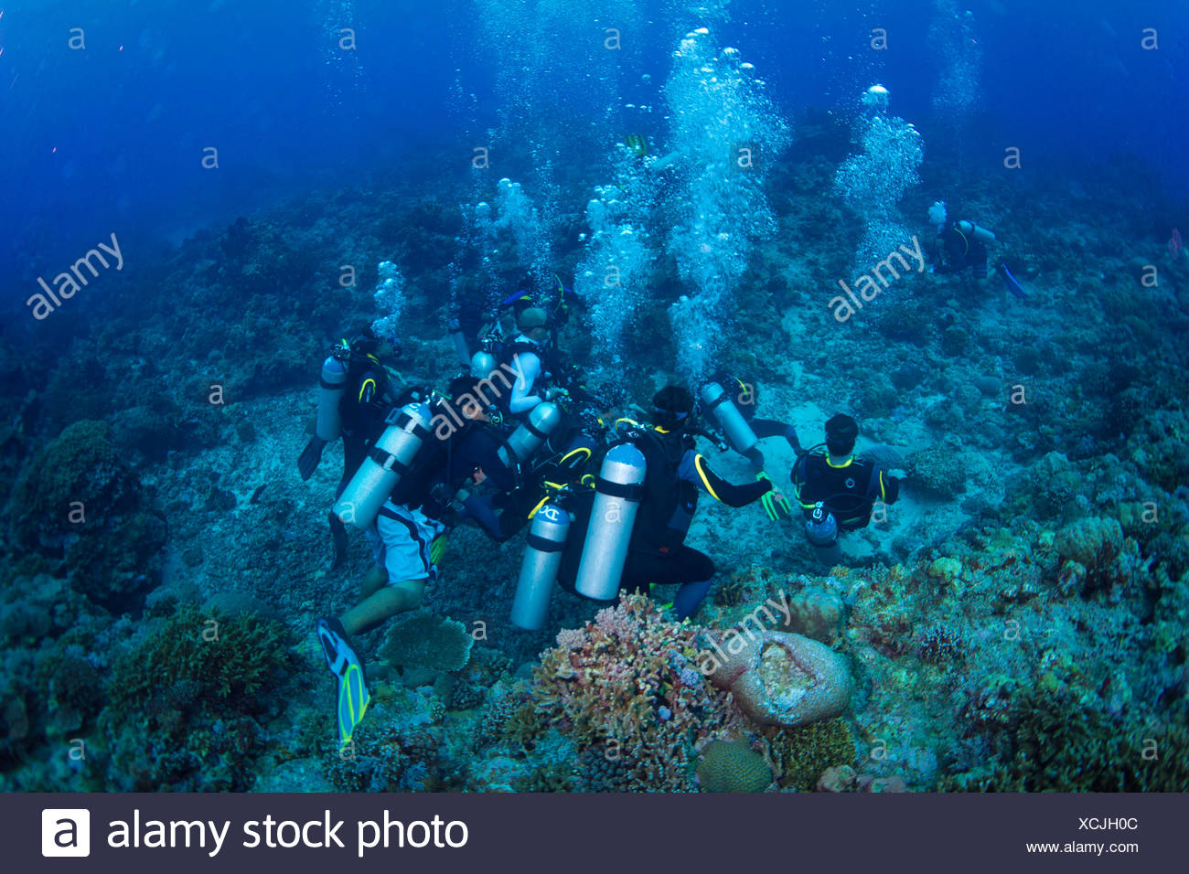 Group of scuba divers on the sea bottom in a coral reef, Philippines Stock Photo