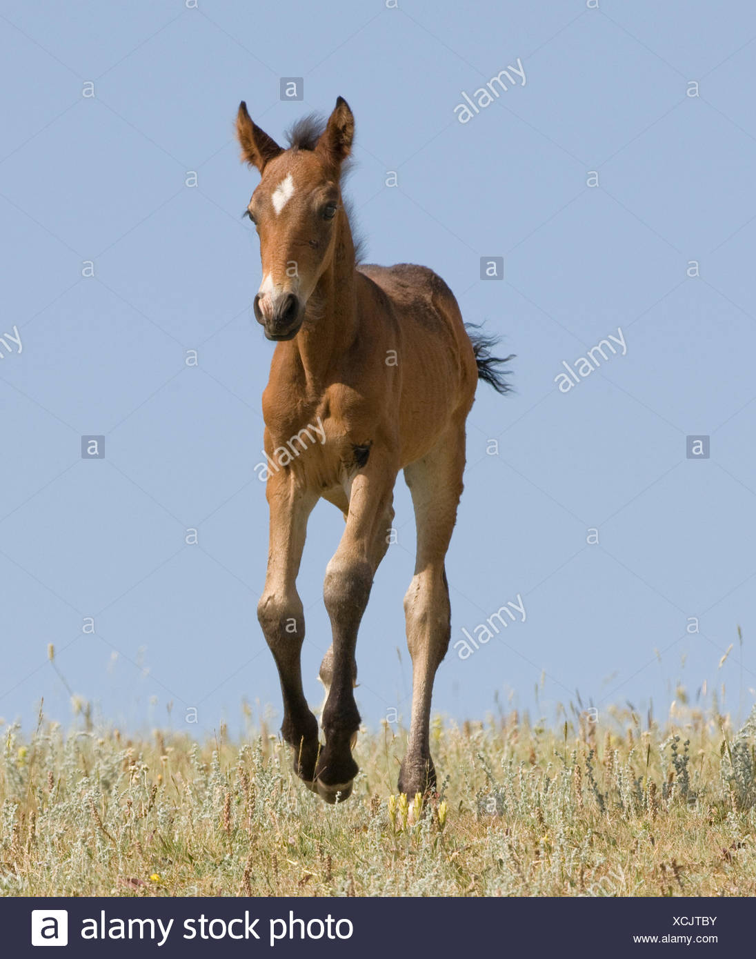 Foal Running Stock Photos & Foal Running Stock Images - Alamy