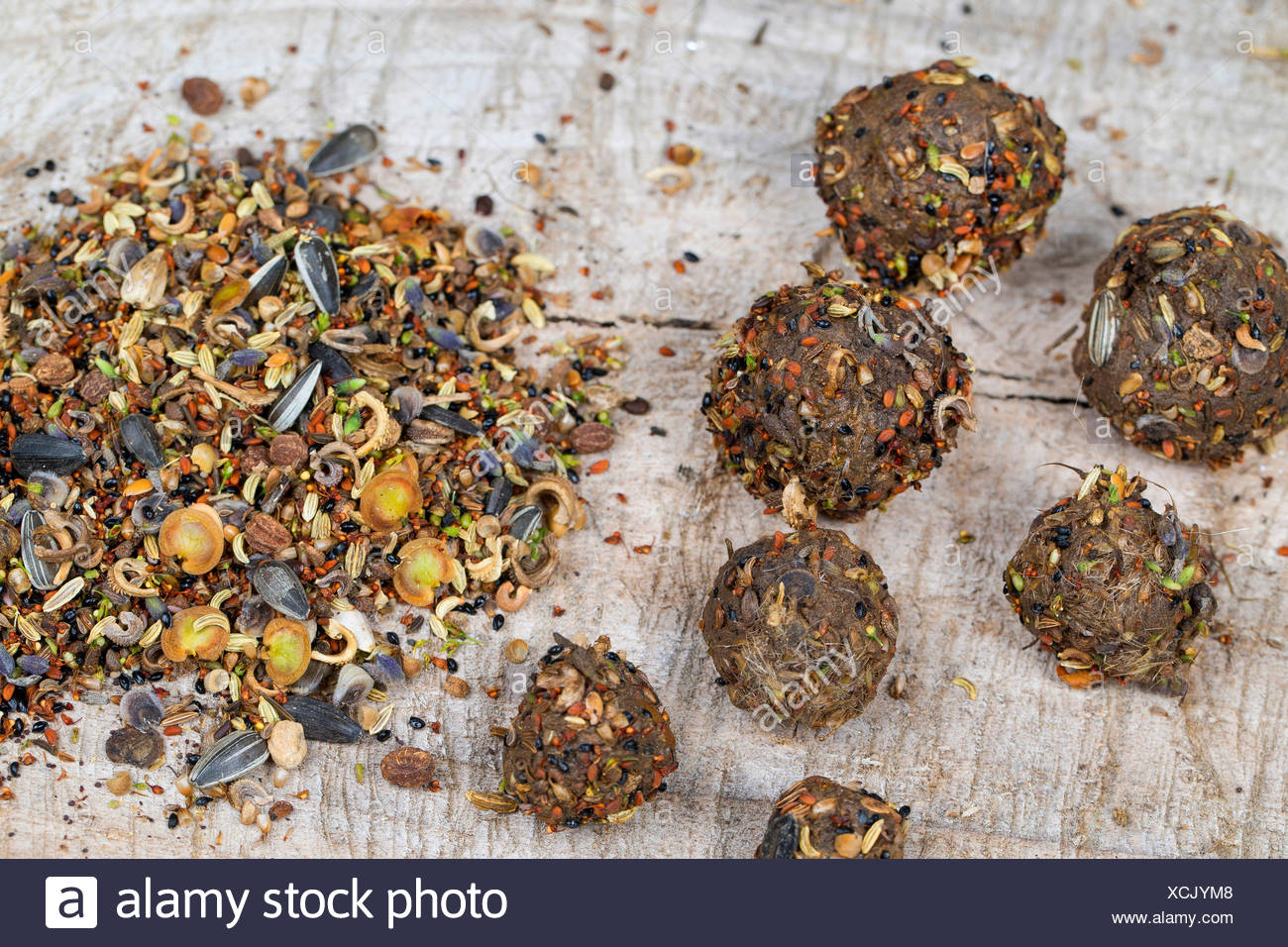 making seed bombs with different seeds and fruits and soil, Germany - Stock Image