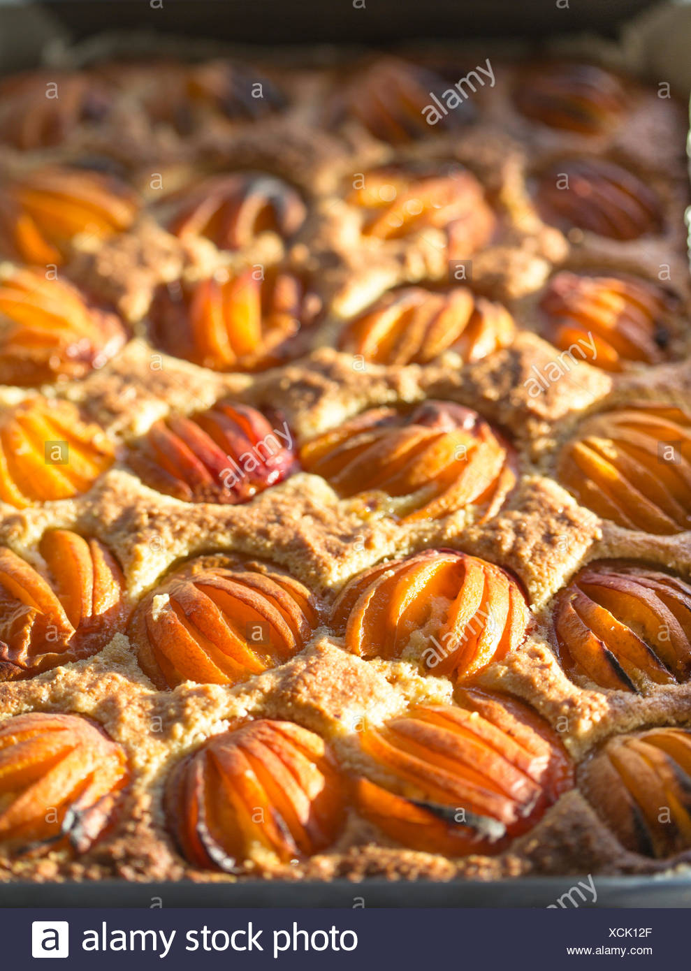 close up of apricot squares fresh from oven. - Stock Image