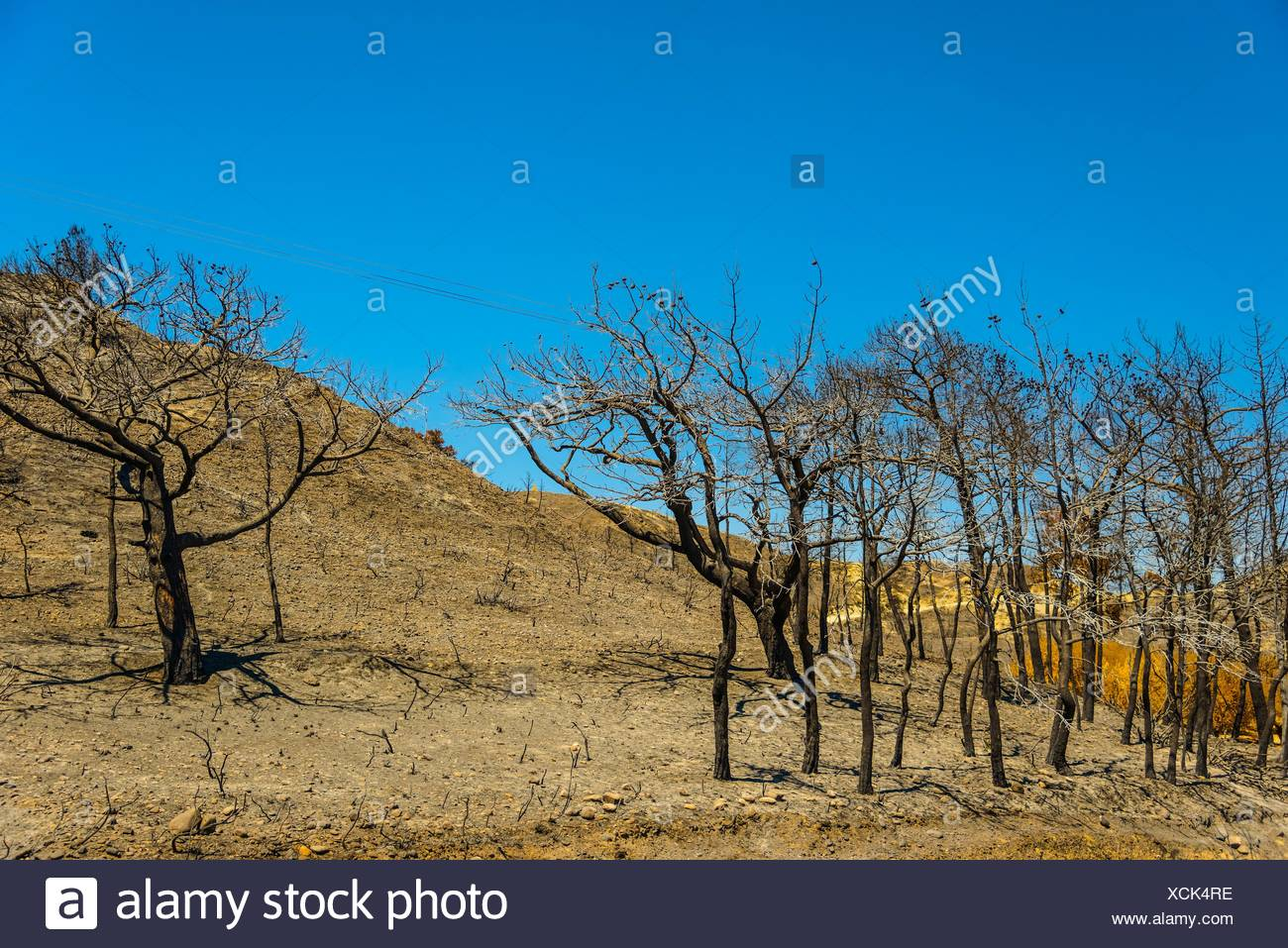 burnt in the fire of trees in the background of hills and sky - Stock Image