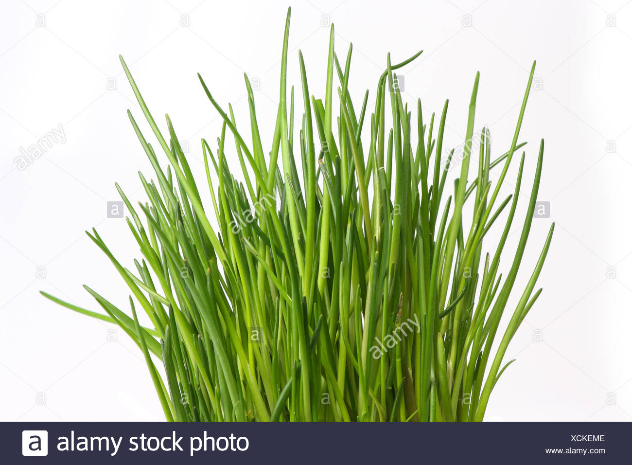 chives Stock Photo