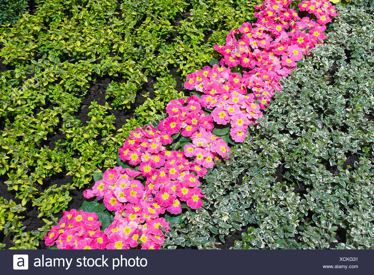 Beautiful flowerbed - Stock Image