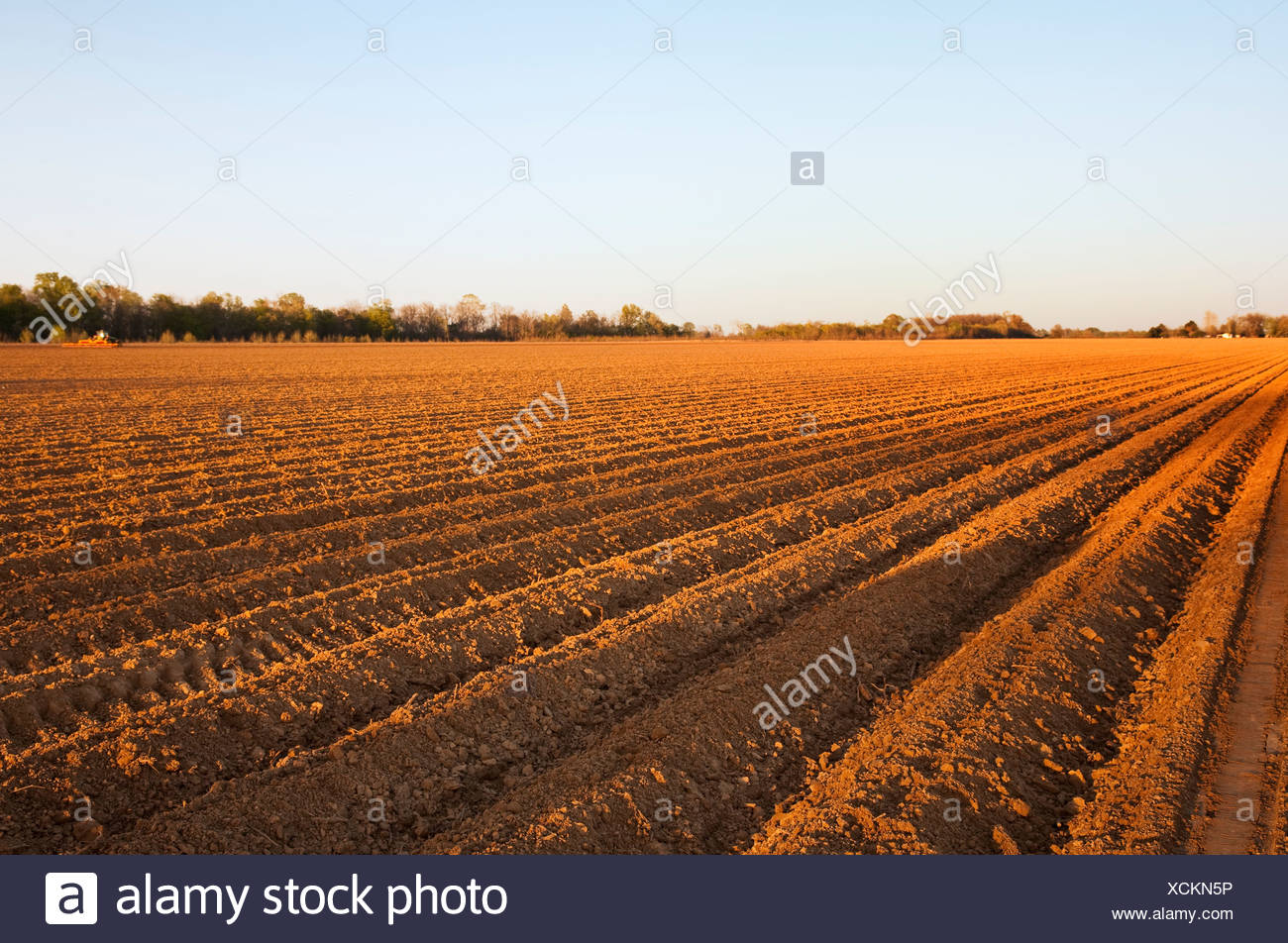 Agriculture - A field of bedded soil that has just been planted to grain corn in late afternoon light / England, Arkansas, USA. - Stock Image